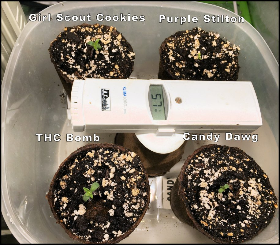 4 Seedlings Day 1.jpg