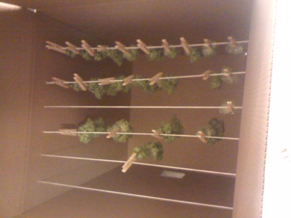 Pro Diy Drying Box I Like To Think So Anyways The Autoflower Network